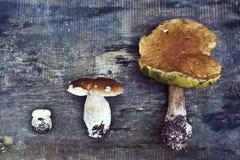 белка пущи s хлеба подосиновика edulis Подосиновик edulis съестной гриб Белый гриб на деревянной предпосылке взгляд сверху - здор Стоковое фото RF