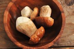 белка пущи s хлеба подосиновика edulis Подосиновик edulis съестной гриб Стоковая Фотография RF