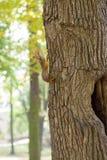 Белка сидит в полости Стоковые Фото