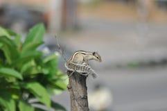 Белка Стоковая Фотография RF