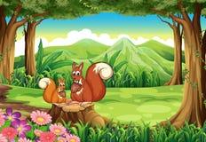 Белки на лесе Стоковые Фото