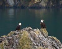2 белоголового орлана Стоковое фото RF