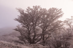Белое дерево и зима Стоковые Фотографии RF