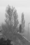 Белое дерево дыма Стоковая Фотография RF