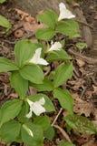 Белое и зеленое время весны Стоковые Изображения RF