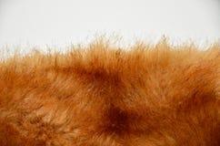 Белое мех коротких волос Стоковые Фото