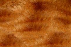 Белое мех коротких волос Стоковая Фотография RF