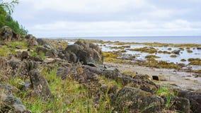 Белое море Стоковая Фотография RF