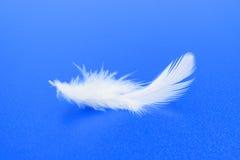 Белое перо на сини Стоковая Фотография RF
