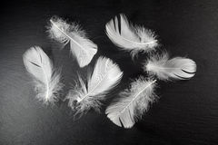Белое перо на черном камне Стоковые Фото