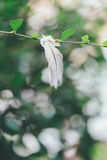 Белое перо птицы на ветви дерева Стоковое Изображение