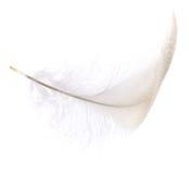 Белое перо птицы Стоковые Фотографии RF