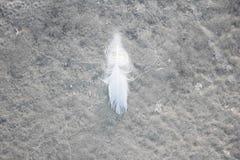 Белое перо Стоковое Изображение