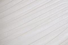 Белое перо Стоковое Изображение RF
