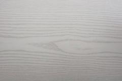 Белое приполюсное дерево Стоковые Изображения RF