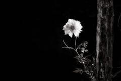 Белое пятно Стоковое Фото