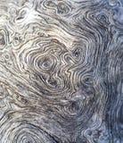 Белое старое дерево около моря Кривые и свирли на деревенском тимберсе Стоковые Фотографии RF