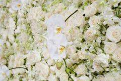 Белое цветение цветет предпосылка Стоковая Фотография RF