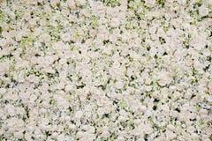 Белое цветение цветет предпосылка Стоковое Изображение RF
