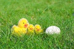 Белое яичко в зеленой траве и крупном плане цыплят Стоковое Фото