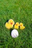Белое яичко в зеленой траве и крупном плане цыплят Стоковые Изображения RF