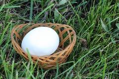 Белое яичко курицы в корзине на траве Стоковое Фото