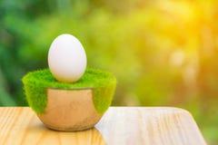 Белое яичко на искусственной траве в баке, на деревянном столе с зеленым цветом Стоковое Изображение RF