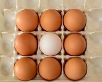 Белое яичко окруженное коричневыми яичками Стоковая Фотография RF