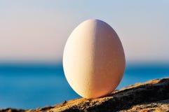 Белое яичко стоковое фото