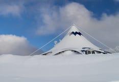 Белое hipped в снеге Стоковое Фото