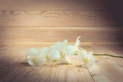 Белое orchidPhalaenopsis на деревянном конце-вверх предпосылки Стоковое Изображение