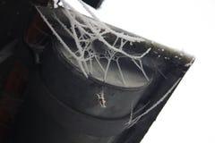 Белое webb в зиме стоковое изображение