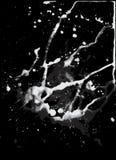 Белой замедленное движение политое жидкостью внутри супер стоковое изображение rf