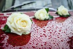 3 белой розы на автомобиле красного вина. Стоковые Изображения RF
