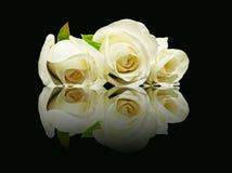 3 белой розы с отражением. Стоковое фото RF