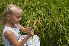 Белокурая маленькая девочка от колосков в руке на поле риса Стоковая Фотография