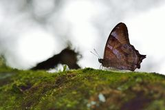 Бело-замкнутая черная бабочка тени Стоковая Фотография RF