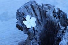 Бело-розовые цветки на деревянных цветках года сбора винограда стиля Стоковое Изображение RF