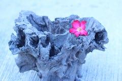 Бело-розовые цветки на деревянных цветках года сбора винограда стиля Стоковое Изображение