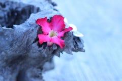 Бело-розовые цветки на деревянных цветках года сбора винограда стиля Стоковое Фото