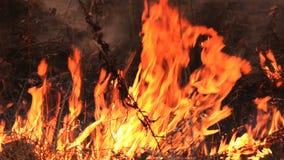 Бедствие все на огне Лес на огне сток-видео