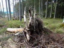 Бедствие леса стоковое фото rf