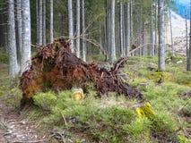 Бедствие леса стоковая фотография rf