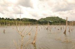 Бедствие цунами стоковые фотографии rf