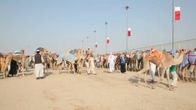 Бедуины с верблюдами гонок. Доха, Катар видеоматериал