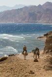 Бедуин на его верблюде, Синай, Dahab Стоковые Изображения RF