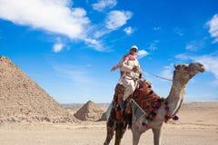 Бедуин усаживает верблюда Стоковая Фотография