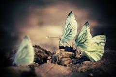 Белые бабочки на sand_2 Стоковое Изображение RF