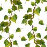 Белые безшовные обои с зелеными листьями березы разветвляют Стоковое Изображение RF