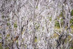 Белые ветви дерева в долине Shevelev Стоковые Фото